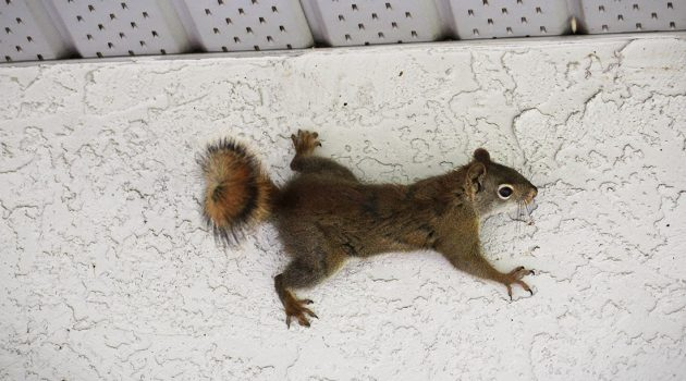 A squirrel control administration can cleanse the undesired natural life