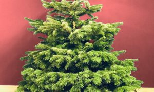 The Most Effective Method To Obtain The Perfect Christmas Tree