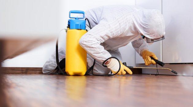 Hiring A Pest Control Company Is True Necessity